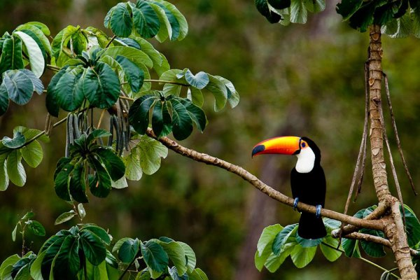 Ученые обнаружили более 380 новых видов флоры и фауны в бразильской Амазонии