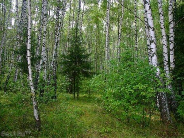 Ученые узнали, почему листья деревьев имеют разную форму и размер