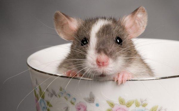 Ученые заявили, что крысы видят страхи во сне