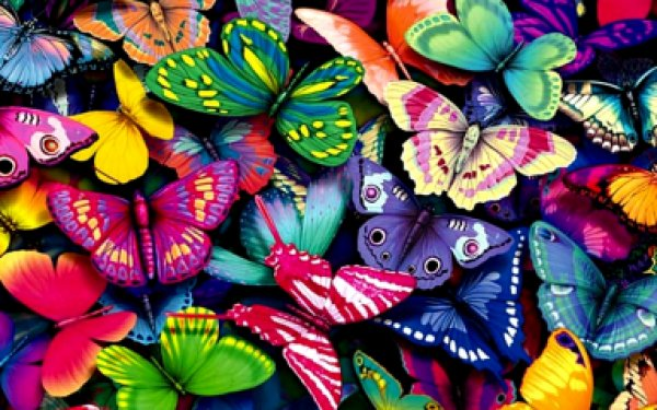 В Северной Америке начали исчезать бабочки