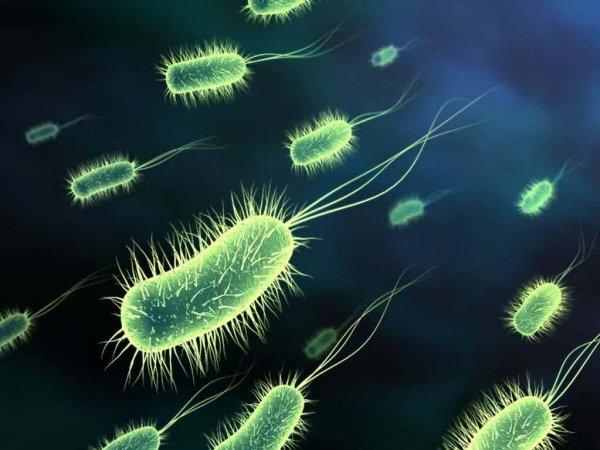 Ученые обнаружили огромное количество микроорганизмов