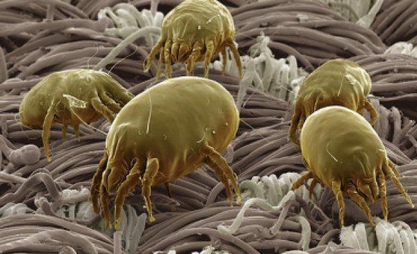 Ученые: Синтетическое постельное белье опасно для здоровья