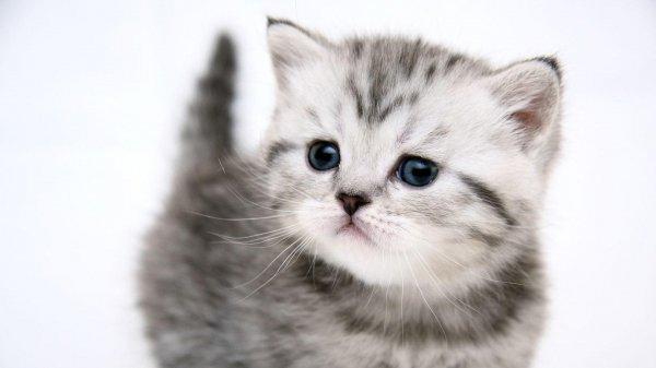 Ученые: Раннее отлучение котят от матери негативно сказывается на их поведении