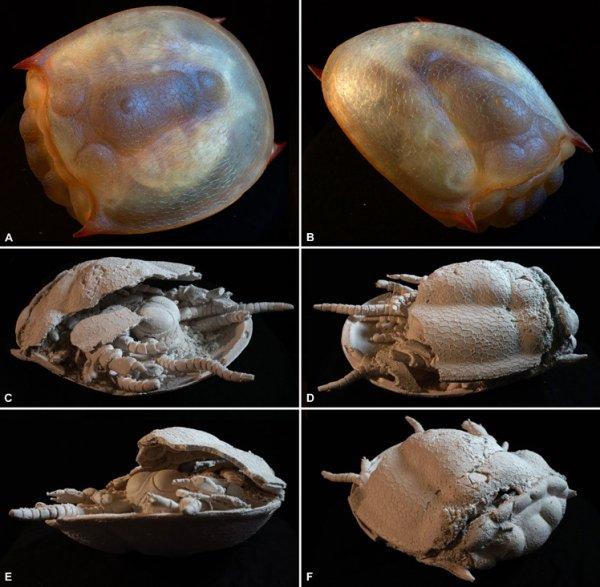 Древнего морского монстра распечатали на 3D-принтере