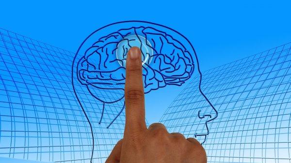 Ученые узнают, как человеческий мозг принимает решения