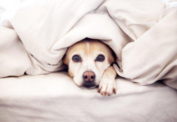 Ученые запретили владельцам собак пускать питомцев в свою постель