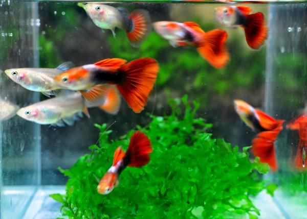 У аквариумных рыбок нашли неожиданные черты характеров
