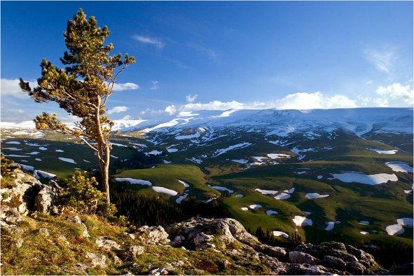 Исследователи: Флору Лагонакского нагорья изменило потепление климата