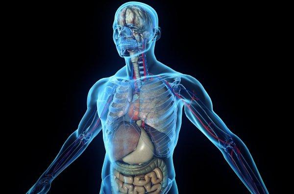 Названы 5 частей тела, которые могут исчезнуть
