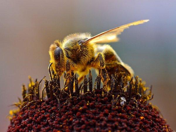 Ученые выяснили, что большинство мирового мёда загрязнено пестицидами