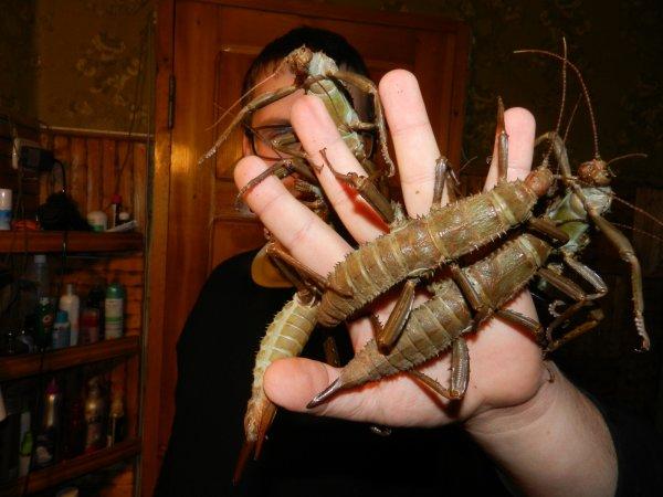 Ученые нашли уникальных насекомых, столетие считавшихся вымершими