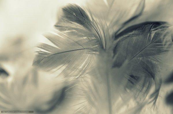 Ученые из Швеции предложили питаться птичьими перьями