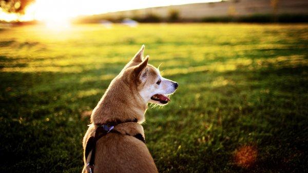 Домашние животные помогают снизить риск заболеваний — Ученые