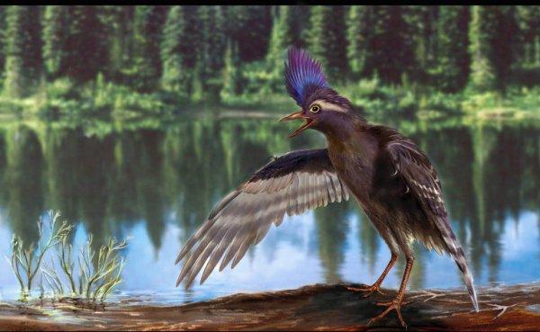 Птицы сумели подняться в воздух 120 млн лет назад