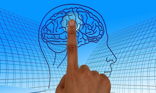 Ученые нашли безотказный способ улучшить работу мозга