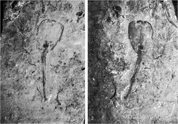 Ученые нашли одного из первых многоклеточных существ Земли в США
