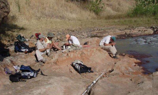 В Африке обнаружили новый вид древних хищников – Pakakali