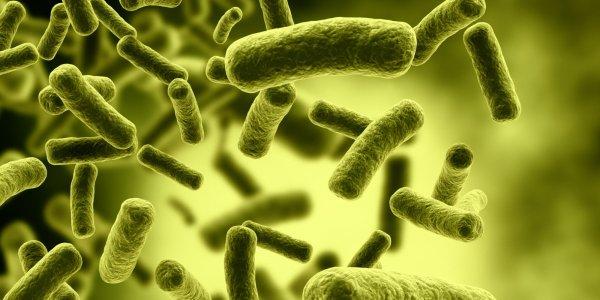 В Якутии найдены древние бактерии возрастом свыше 3 млн лет