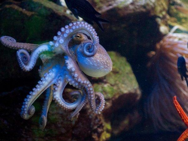 Мышцы осьминогов вдохновили учёных создать надувную программируемую силиконовую «кожу»