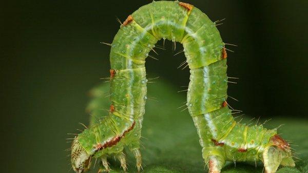 В Германии из-за гербицидов резко пропало 75-82% насекомых