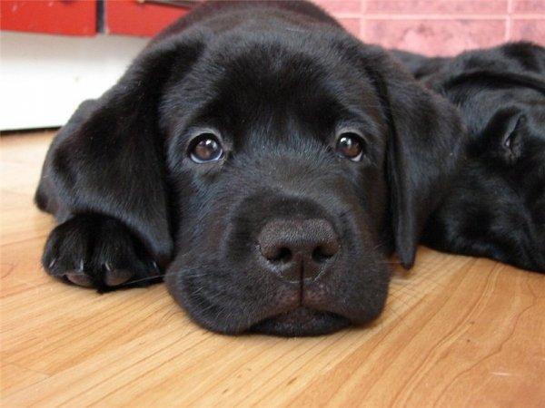 Учёные заявили, что собаки используют мимику для общения с людьми