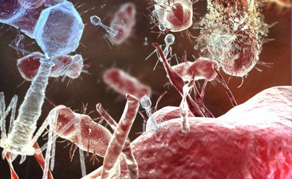 Ученые: Организм учится защищать себя на неполноценных вирусных частицах