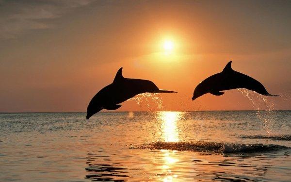 Ученые нашли в мозге дельфинов признаки болезни Альцгеймера
