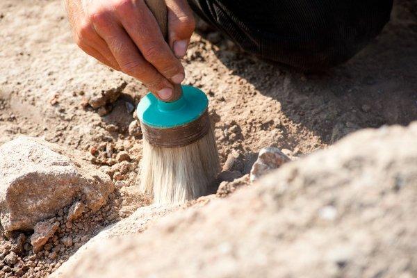 В Швейцарии обнаружили останки жившей 240 млн лет назад рыбы