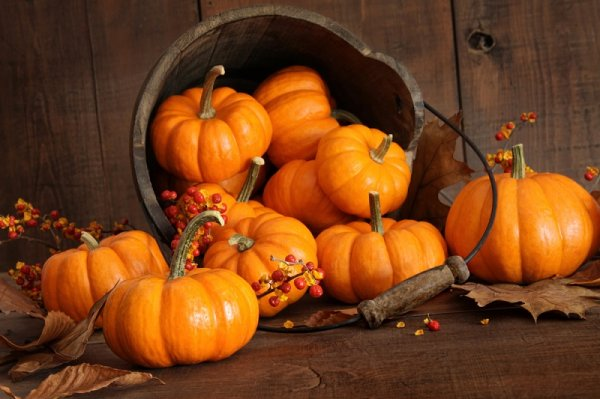 Накануне Хэллоуина эксперты рассказали об опасности тыквы