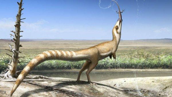 Ученые рассказали о динозавре с «бандитской маской» и особенностях его жизни