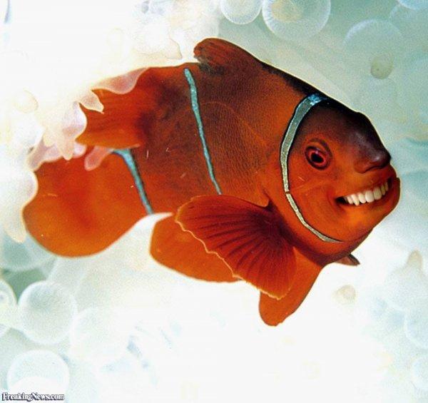 Ученые впервые обнаружили эмоциональное состояние у рыб