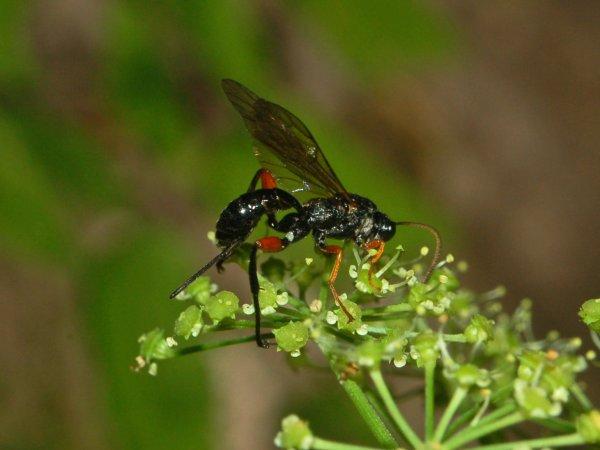Ученые объяснили причины непорочного зачатия насекомых
