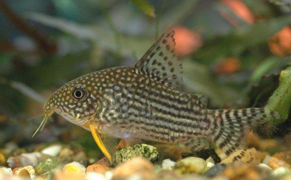 Ученые раскрыли предназначение зубов на теле у древних рыб