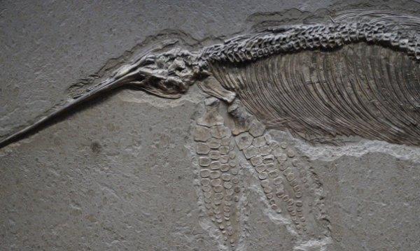 Ученые обнаружили в Индии скелет гигантского ихтиозавра