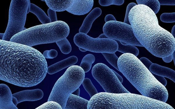 Ученые: Люди скорее погибнут от супербактерий, чем от климата