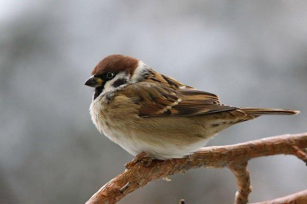 В Чите за полтора месяца о стекла здания разбилось более 50 птиц