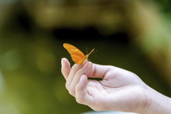 Экспедиция на Алтае нашла шесть новых видов бабочек для фауны России