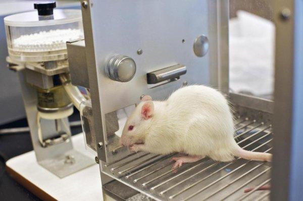 Питание ночью опасно для здоровья: Новые открытия учёных
