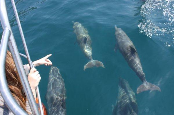 Возведение Крымского моста повлияло на дельфинов