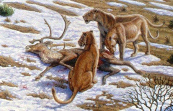 Ученые заявили о попытке клонировать пещерного львенка