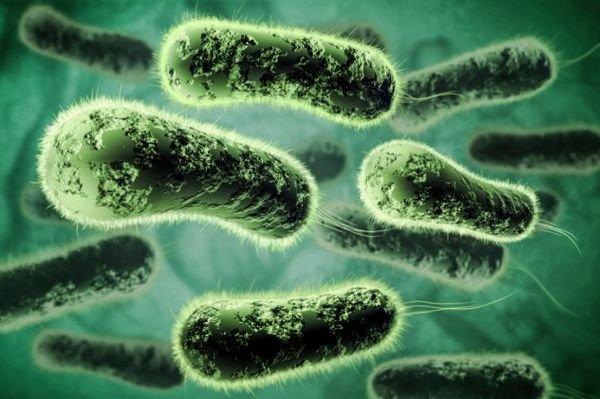Врачи обнаружили причину женского бесплодия в болезни мочевых путей