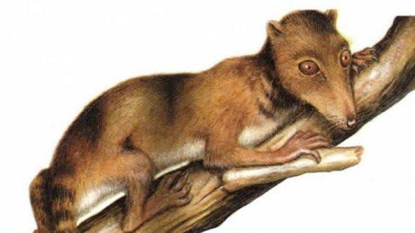 Крысы рядом с ящерами, римляне в Мексике и динозавры в каменном веке: Удивительные открытия о нашем прошлом