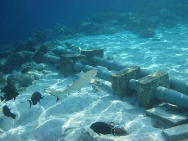 Океанологи объяснили возраст древнейшей воды в океане