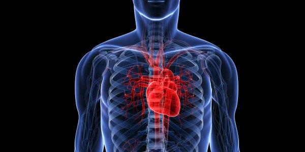 Ученые выяснили, что для сердца опаснее всего