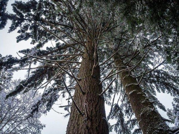 Ученые: Деревья в городе растут быстрее, чем в сельской местности
