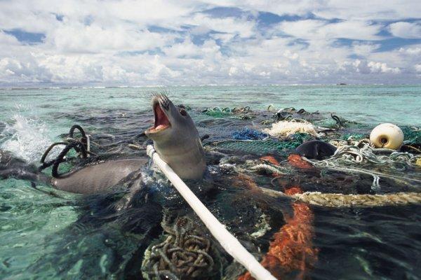 В желудках морских существ из Марианской впадины обнаружена пластмасса