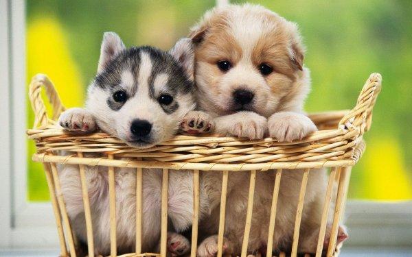 Специалисты: Названа самая эффективная схема дрессировки собак