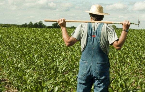 Ученые: Органическое фермерство сумеет прокормить Землю