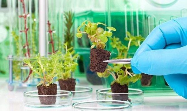 Военные научат ГМО-растения шпионить