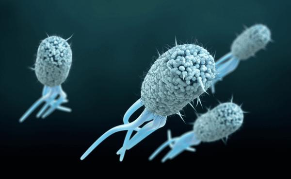 Ученые сделали из бактерии магнитофон с помощью CRISPR
